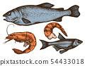 Vector set of hand drawn colored fish, shrimp 54433018