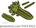 Vector set of hand drawn colored celery 54433021