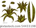 Vector set of hand drawn colored aloe 54433198