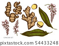 Vector set of hand drawn colored ginger 54433248