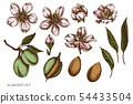 Vector set of hand drawn colored almond 54433504