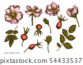 Vector set of hand drawn colored dog rose 54433537