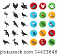 Types of birds black,flat icons in set collection for design. Home and wild bird vector symbol stock 54433646