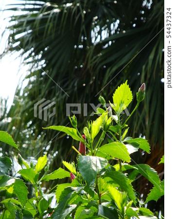 Sun flower 54437324