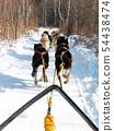 Dog sledding in Listvyanka village, Russia. 54438474
