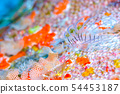 有角的蓑魚的幼小魚 54453187