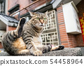 fat stray tabby cat scratching himself 54458964