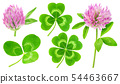Isolated clover leaves and flowers 54463667