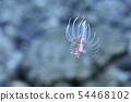 有角的蓑魚的幼小魚 54468102