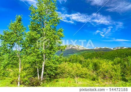 <<長野縣>新鮮的綠色Nokori高原,白樺和藍天 54472188