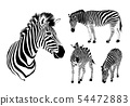 Graphical set of zebra.  54472883