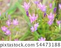 플로 디아 캘리포니아 모기 꽃 54473188