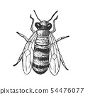 Striped Bee Flying Insect Animal Top View Vector 54476077