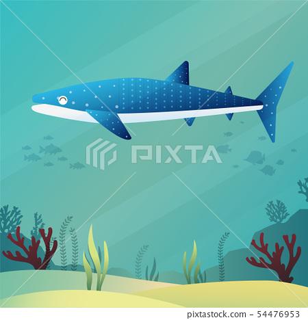 Whale shark 54476953