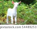 山羊 54489253