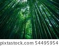 [Background material] Bamboo forest on rainy day 54495954