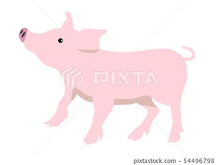 Pig illustrations 54496798