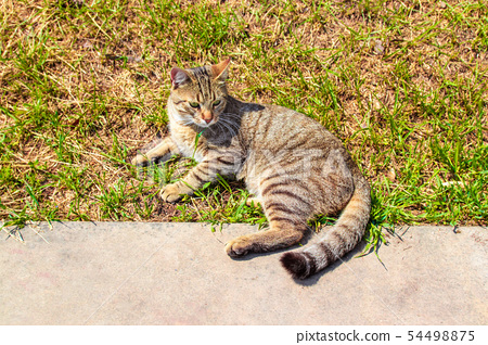 Portrait of a female gray brown cat lying in the 54498875