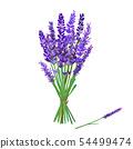 花朵 花 花卉 54499474