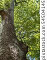 공원의 나무 54504145