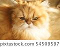 我們的貓 54509597