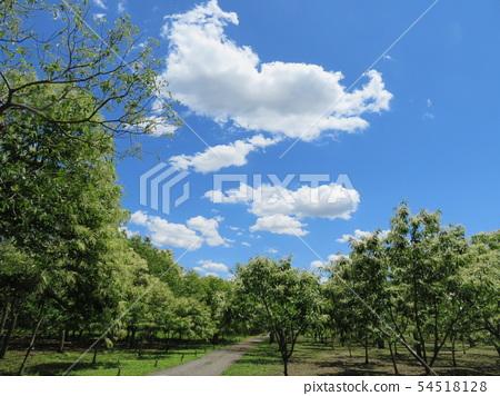 Chestnut garden of Wakayama Farm 54518128