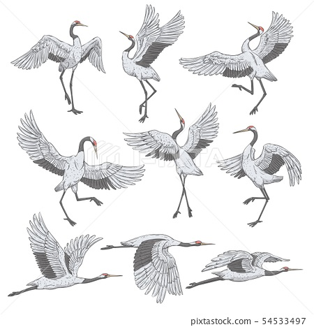 Set of white cranes in different positions 54533497