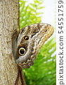 tropical butterfly resting 54551759