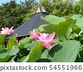 치바 공원 오오가하스의 분홍색의 꽃 54551966