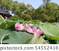 치바 공원 오오가하스의 분홍색의 꽃 54552416