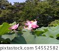 치바 공원 오오가하스의 분홍색의 꽃 54552582