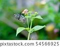 蝴蝶的蜂蜡 54566925