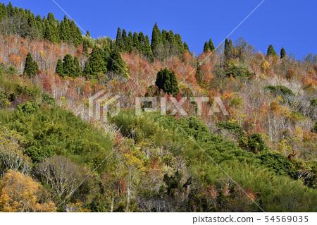 秋天五顏六色的森林 54569035