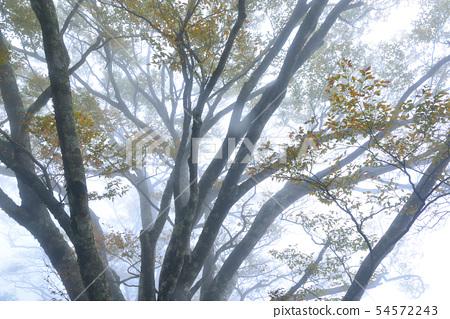 안개가 자욱한 숲 너도밤 나무 대만 너도밤 나무 나라 트레일 일란 태평 산 54572243