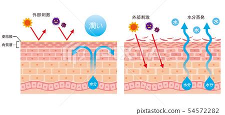 피부 장벽 기능 피부 구조 54572282