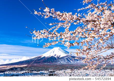 山山县望む富士山的景色·樱花和雪的新仓山浅间公园 54572894
