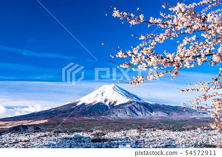 """可以俯瞰富士山的櫻花和雪景的""""山梨縣""""新村山仙根公園 54572911"""