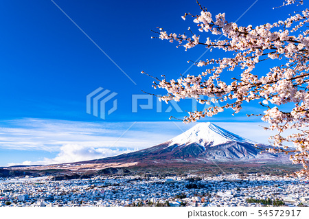 山 Yamanashi Prefecture 望 む A view of Mount Fuji ・ Sakura and Snow's Shin Kurayama Asama Park 54572917