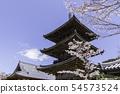 [나라현] 壷阪寺 벚꽃 봄 54573524