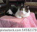 흑백 고양이 하찌와레 난로 54582179