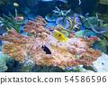 산호초 주위를 헤엄 치는 물고기 54586596