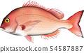 紅海魴例證傳染媒介 54587887