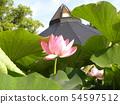 Pink flower of Ogajas at Chiba Park 54597512