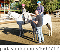 Woman and man with trainer riding horse at farm at summer day 54602712