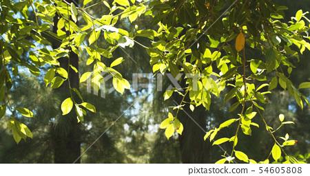 Beautiful Sunshine Through Leaves Of Summer Tree 54605808