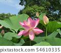 Ogajas桃紅色花在千葉公園的 54610335