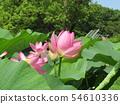 Ogajas桃红色花在千叶公园的 54610336