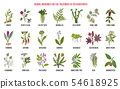 Best herbal remedies for osteoarthritis 54618925
