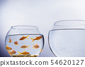 Goldfish in a crowded bowl 54620127
