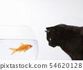 A black cat staring at a goldfish 54620128